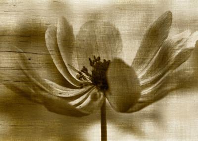 Ornella Bonomini flower in the garden   Displate Prints on Steel