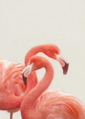 flamingo flamingos bird birds pastel peach apricot elegant tropic tropical photography photo picture orange couple love cute harmony marriage wedding parents parenting mexico california florida beige nude minimal modern monikastrigel monika