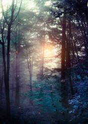 forest landscape nature magical