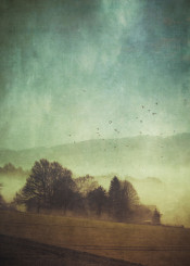 mist mood rural trees painterly birds impressionistic field clouds