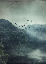 birds mountaisns forest mist fog clouds atmosphere spain valley view green texture