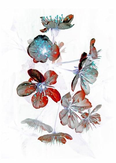 Mod Artisto Flowers in the light   Displate Prints on Steel