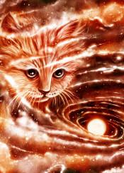 cat space galaxy