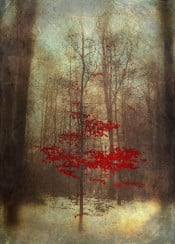 tree red winter snow dreamy forest nature vintage enchanted texture outdoor