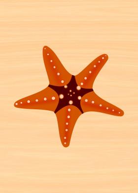 seastar star fish starfish beach summer animal ocean sea
