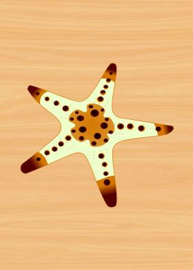 sea star seastar starfish fish animal beach ocean summer sand