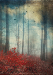 leaves colors red blue forest abstraction birds clouds composing manipulation mood winter fall trees bucolic white mysterious