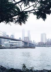 nyc newyork brooklyn fog bridge tree nature manhattan river urban skyline