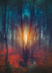 mystical surreal creek water sunlight red blue yellow dark misty outdoor forest sunrise leaves winter fall season landscape