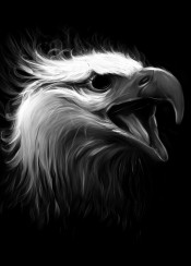 bird eagle blackandwhite eye
