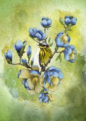 magnolia blue bird