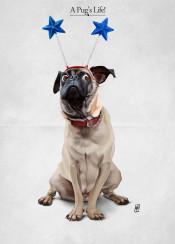 pug dog deely bopper animal cannine star expression paws fun