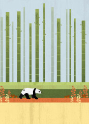 nature animal animals landscape bear panda bamboo flower plant yellow green blue