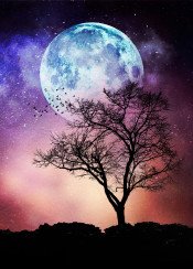 moon tree sky stars textures colors fantasy mood silhouettes birds digital illustration atmosphere clouds