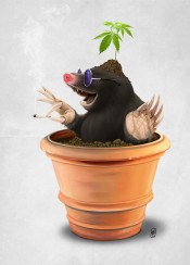 mole animal mammal smoking pot grass growing cannabis plant cigarette soil flower