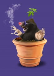 mole animal mammal drugs digging pot grass plant smoking joint leaves soil rodent