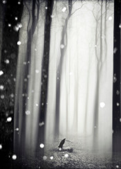 snowflakes abstraction bird mystical surreal monochrome misty trees forest texture dreamy landscape