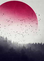 forest mist mystery dreamy surreal photomanipulation red black outdoors birds trees textures nature circle