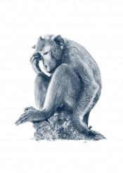 monkey thinker big monochrome animal isolated white meditation relax