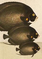 art digital colors animals fish