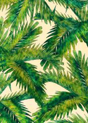 palms flora flower flowers palm