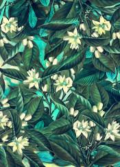 flower flowers flora floral botanical garden pattern decoration leaf