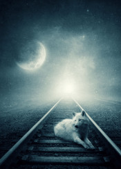 wolf railways moon storm light dreamy stars dark moody