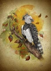 harpy eagle autumn