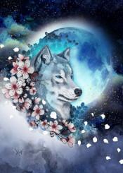 sakura wolf moon