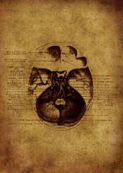 anatomic vintage illustration