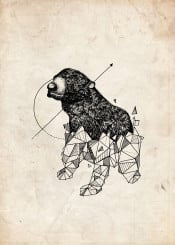 illustration geometric bear animal animalgeometric break vintage retro classic