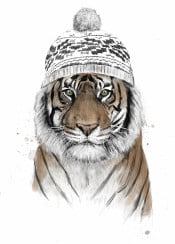 tiger cat animal winter beanie drawing humor funny grunge