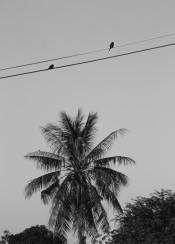 birds bird two palm