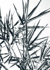 bamboo nature leaves leaf