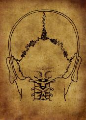 anatomy anatomic vintage illustration