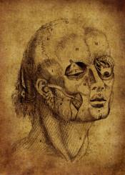 anatomy anatomic illustraion vintage