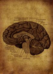 anatomic anatomy illustration vintage