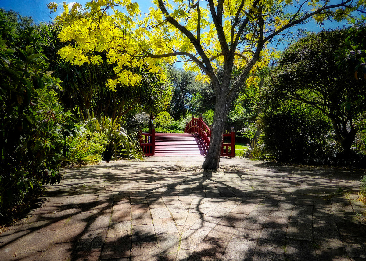 Walking thru the Shadows to the Bridge. Photographed at the Wollongo