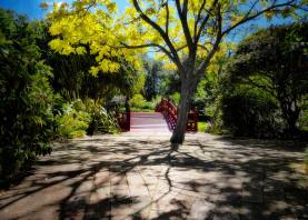 bridge shadows garden tree nature journey