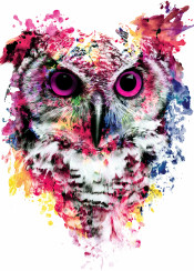 owls watercolor colorful birds poster
