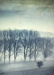 fog mist trees winter rural frost birds textures field outdoor nature mood