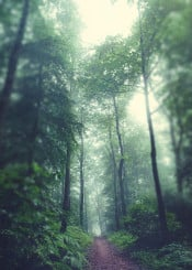trees blur mist forest backlight mystery dreamy lush green hike nature summer
