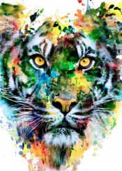 wildlife animals tigers cats colorful