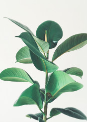 plant leaves green vintage photography botanical nature