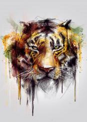 tiger cool wild