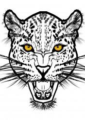 jaguar cat big wild illustration portrait black white yellow tiger lion