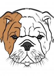 bulldog dog puppy cute illustration portrait black white brown british english bull