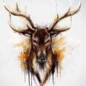 Deer (Alpha series)