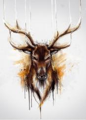 deer cool wild watercolor nature amazing
