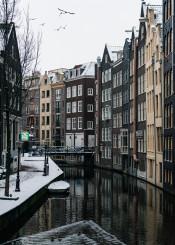 amsterdam netherlands dutch birds canal reflection architecture